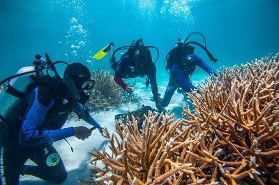 Geólogo Osiris de León advierte que botaderos de basura en las costa amenazan el turismo dominicano