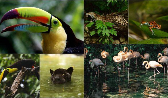 Centroamérica y República Dominicana, cuna de especies exuberantes