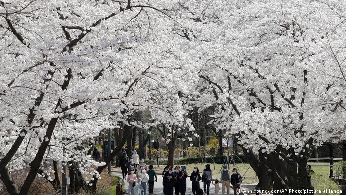 Aroma de primavera en pandemia