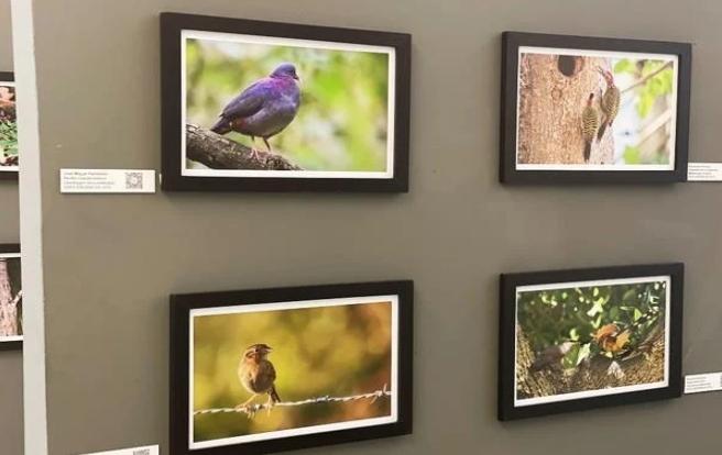 Una muestra fotográfica sobre las aves endémicas de la región