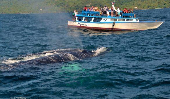 Abren registro de embarcaciones para observación de ballenas en la temporada 2022